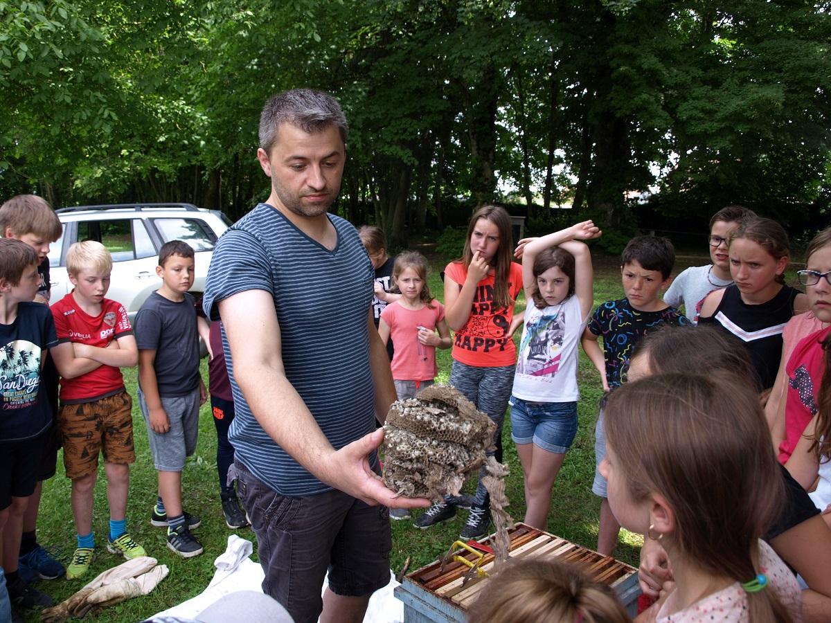Les élèves découvrent la vie dans une ruche